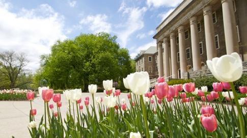 Tulips at Old Main